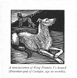 Wood engraving of one of Phyllis's hounds, Diamhar Gael